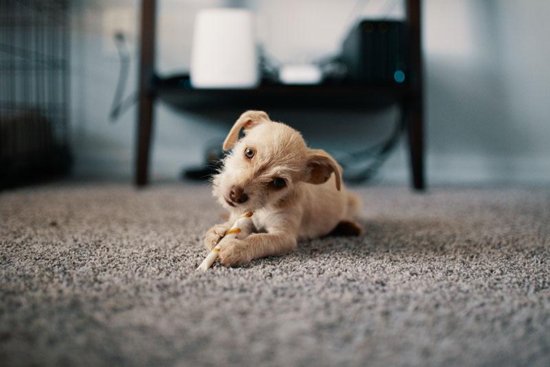 Nettoyage de tapis : Que se cache-t-il dans votre tapis ?